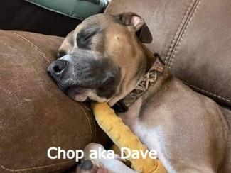 Chop aka Dave Happy tails_edited_edited_edited_edited.jpg