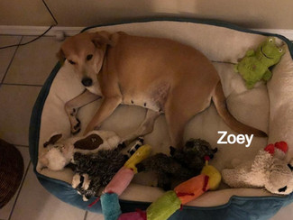Zoey%252020-0122%2520Adoption_edited_edi