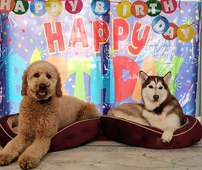gunner nog happy birthday.jpg