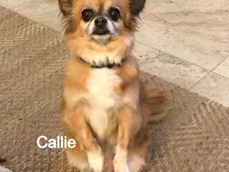 Callie%2520Adoption_edited_edited.jpg