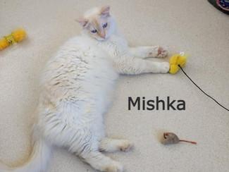 Mishka 20-0032 _edited.jpg