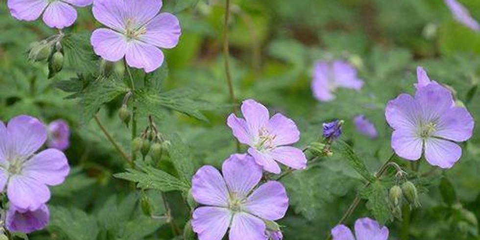 Herbal Kids Class: Wild Spring Herbs - Postponed