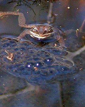 woodfrog.5_email.jpg