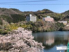 桜満開の内場池