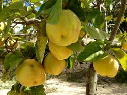 Il frutteto