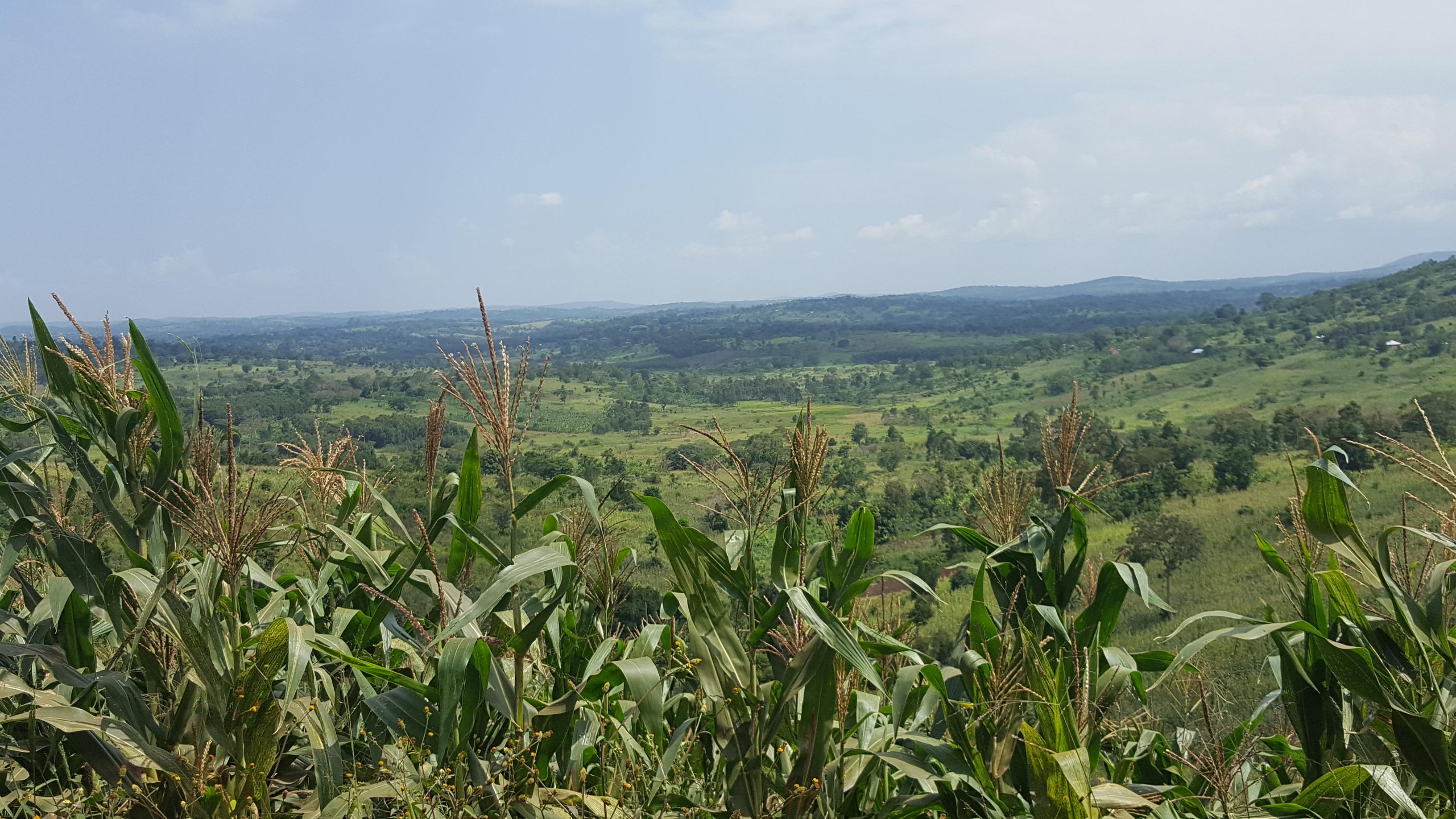Uganda countryside