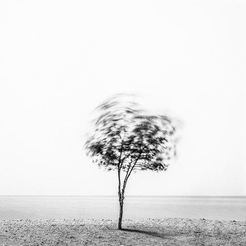tree-in-the-wind.jpg