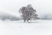 Résilience hivernale