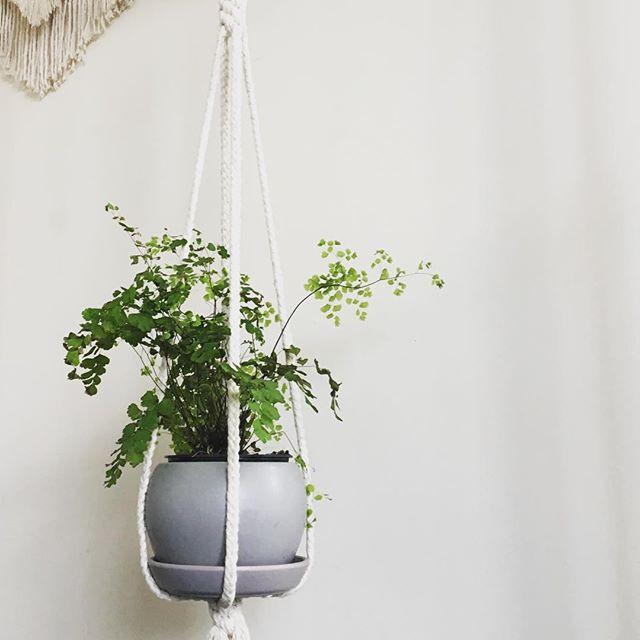 plant hanger braid