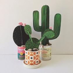 Cacti and Canyons.jpg