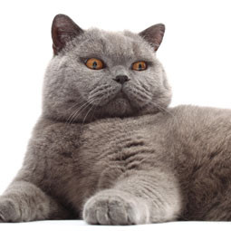 Avoid Being a Fat Cat!