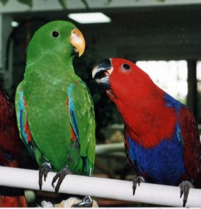 Dangerous Household Toxins for your Birds - Part 2