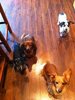 Pet sitting in Vancouver WA