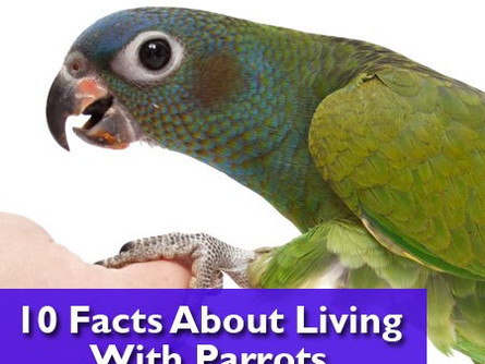 Fun Facts about Parrots