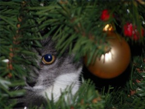 Holiday Plants and Pets