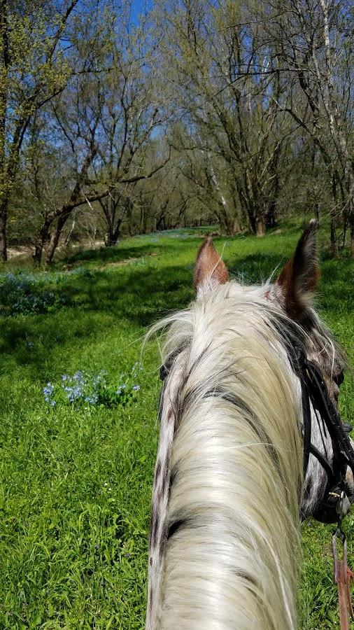 Horse Thinking