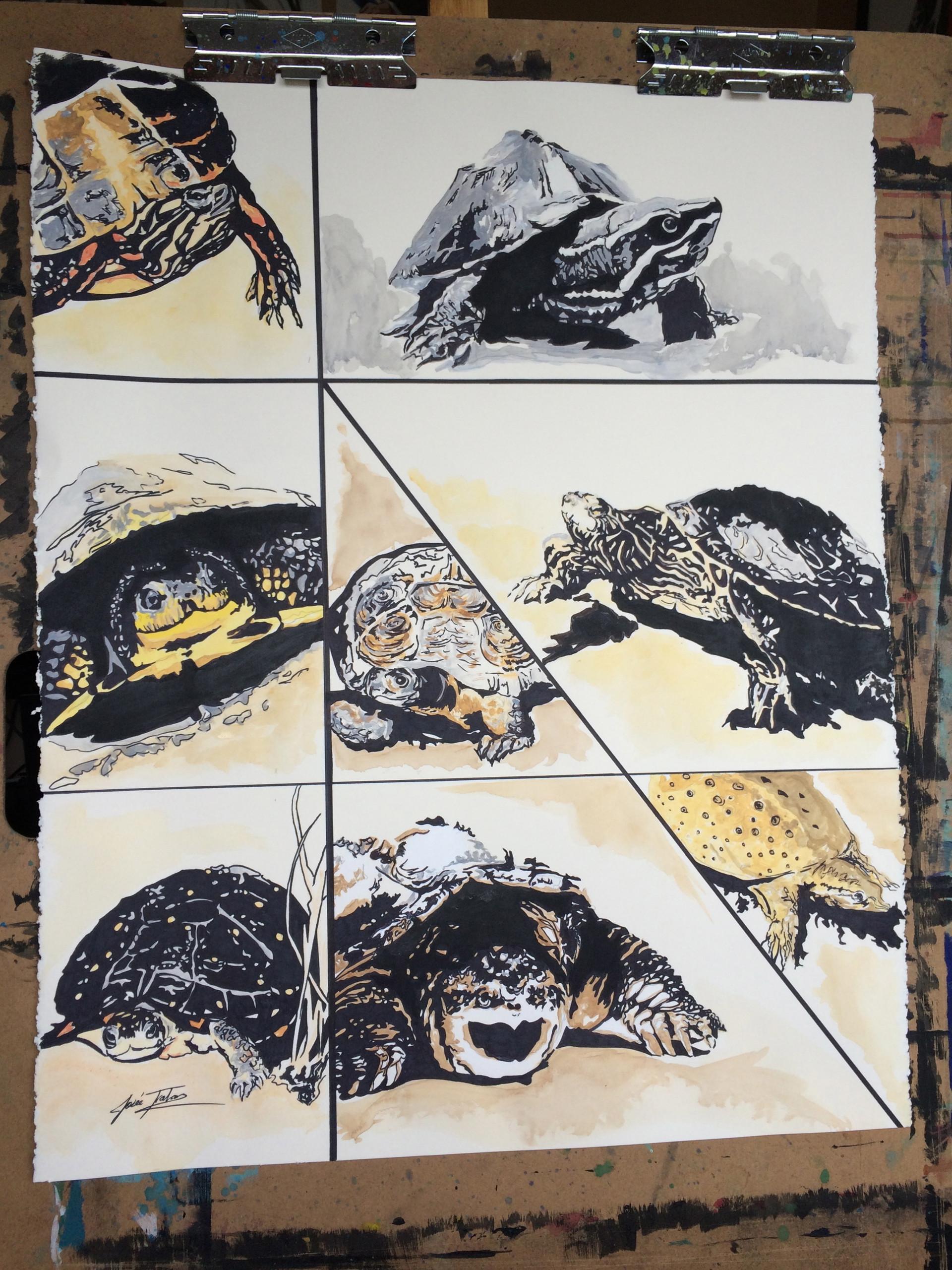 Turtles of Ontario