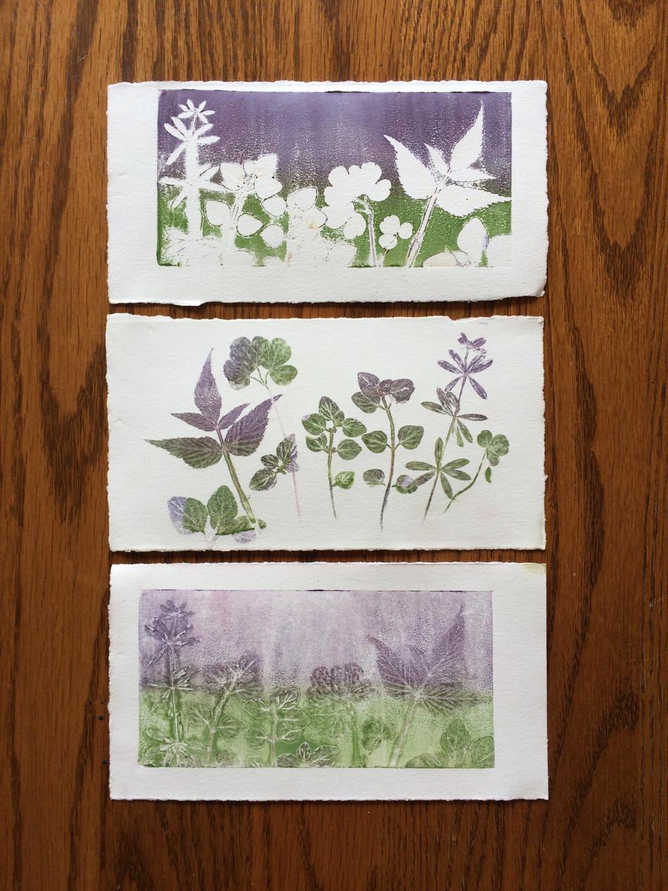 Week 33 - The Garden