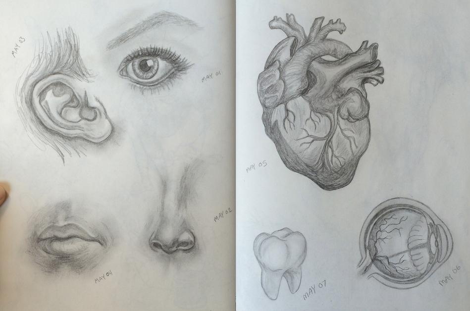 May Theme : Anatomy