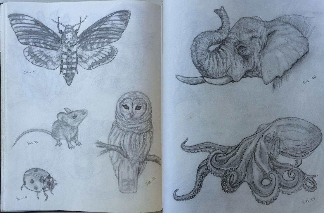 July Theme : Wildlife