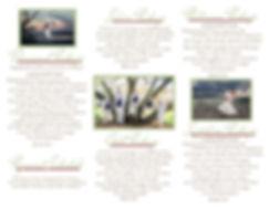 8.5'' x 11'' inside of brochure.jpg