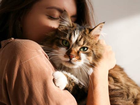 Should you Adopt a Pet During Quarantine?