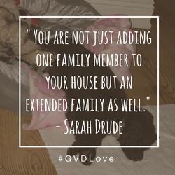 GVDquote_drude
