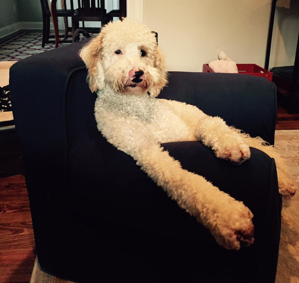 cutieonchair