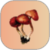 Mushrooms Filter for Instagram and Facebook (Artwork: Julia Asenbaum)