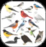 Birds of North America Filter Instagram Facebook (Artwork: Kayla Fisk)