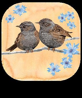 Cute Bird Filter Instagram Facebook (Artwork: Lovemyrte)