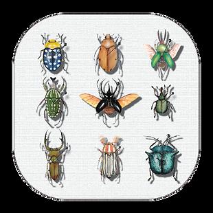 Beetle Filter Instagram Facebook (Artwork: Nussay_Watercolor)