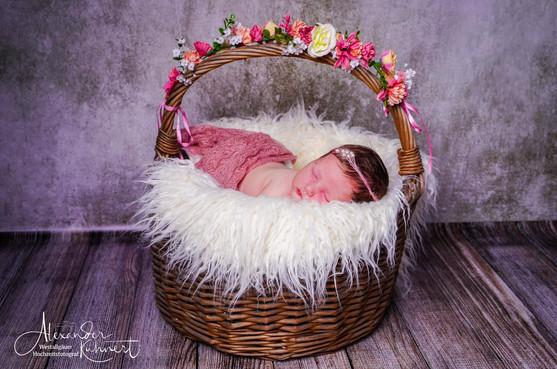 newborn 12-1-2.jpg