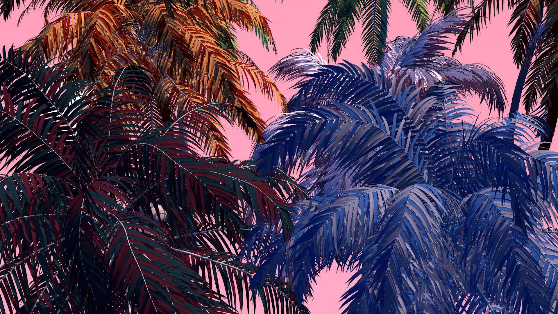 landscape6_palm_zoomIn_0000