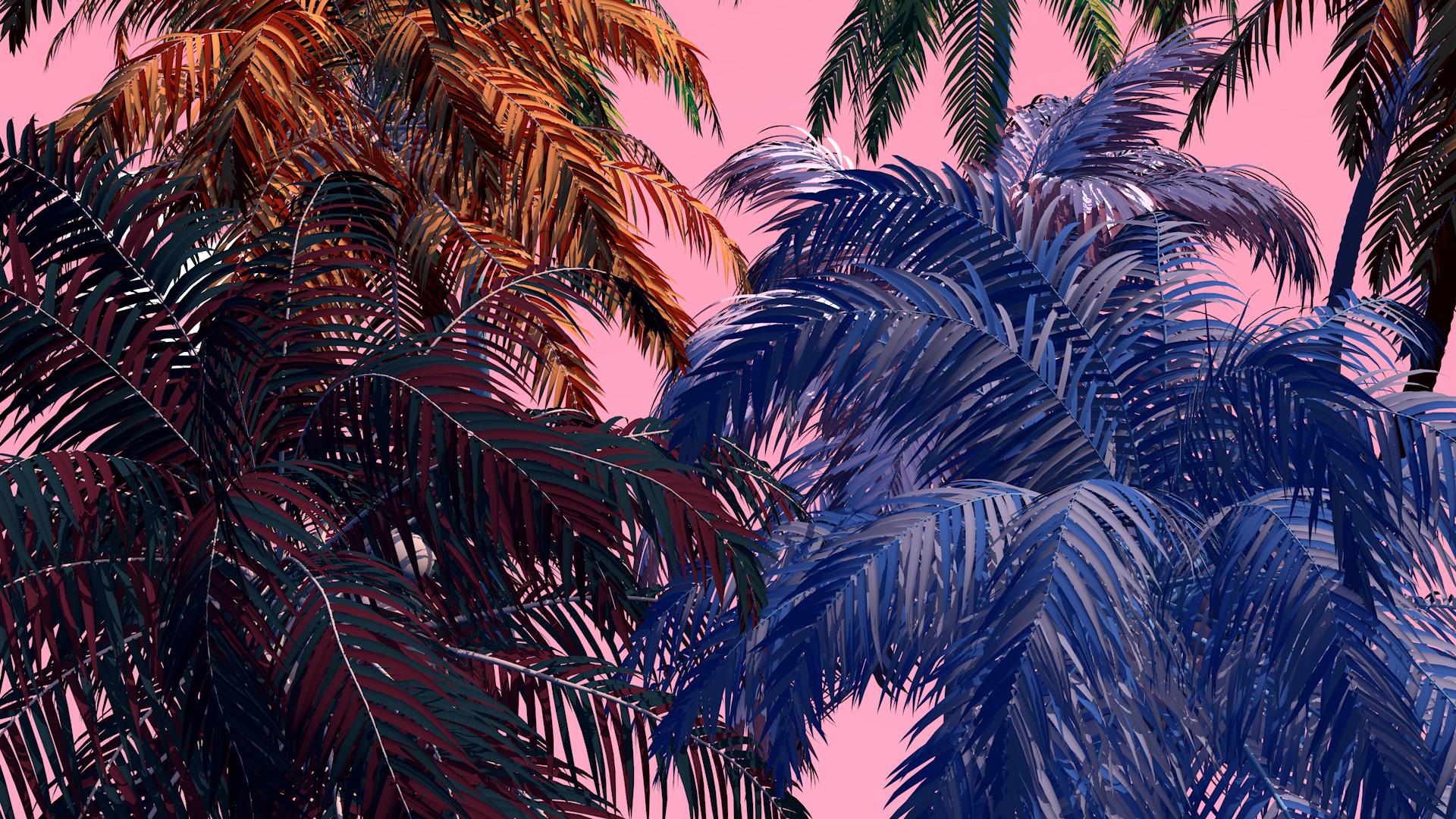 landscape6_palm_zoomIn_0000