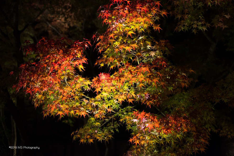 Kyoto at Night No. 10