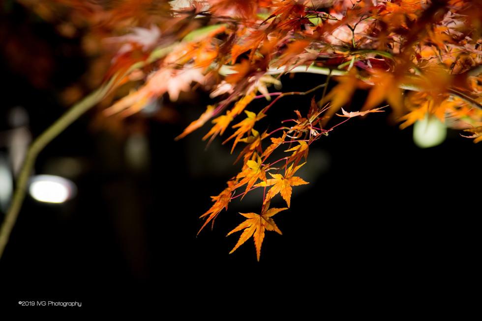 Kyoto at Night No. 7