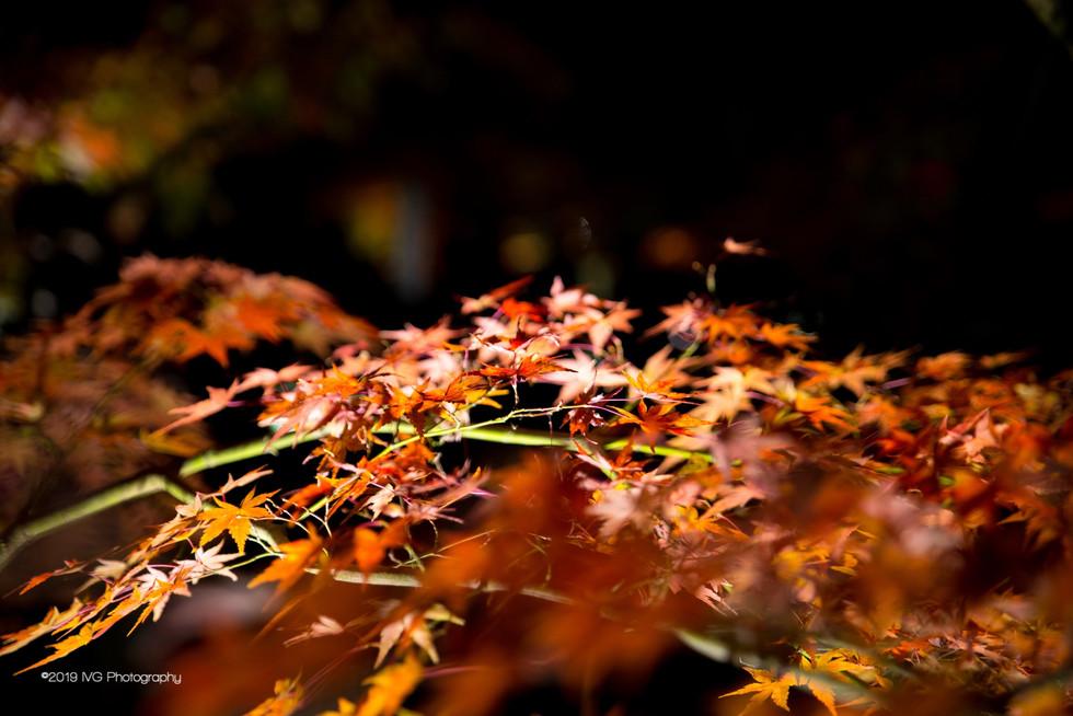 Kyoto at Night No. 4
