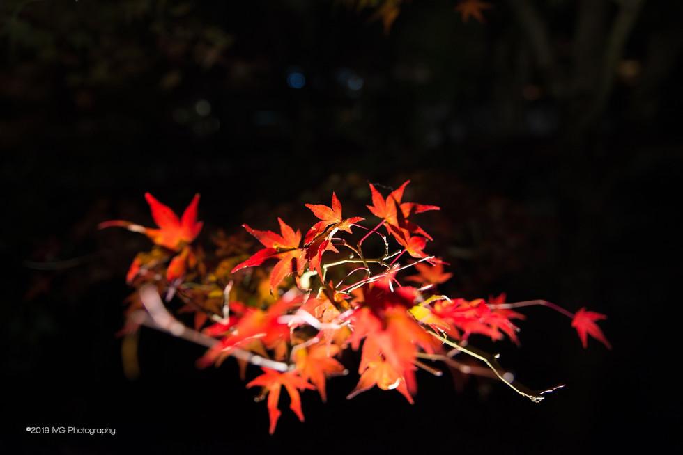 Kyoto at Night No. 9