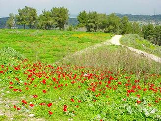 イスラエルの花