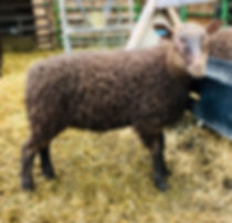 2019-12G ram lamb.jpg