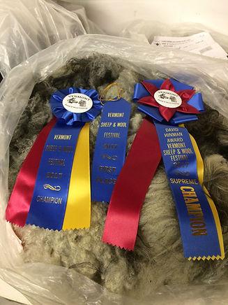 Pure bred Icelandic sheep