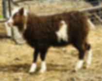 2019-17G ewe lamb.jpg