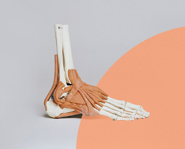 East_Point_Web_Imagery_Skeletal_Foot_02_