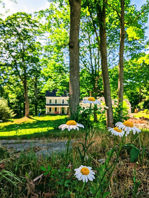 Daisies and farmhouse.jpg