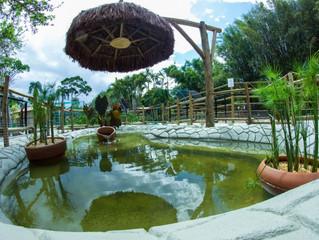 Arca de Noah - Educação Ambiental