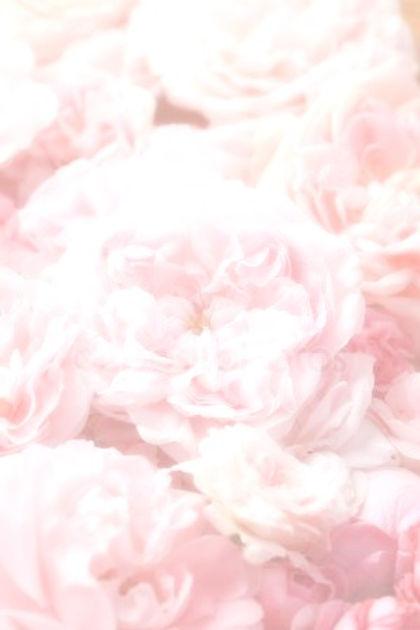 depositphotos_62826259-stock-photo-roses