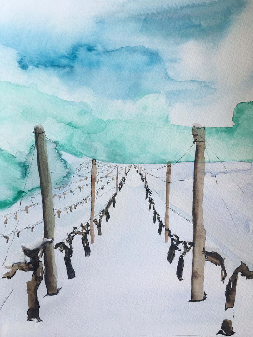 wineyards in snow henrike gootjes.JPG