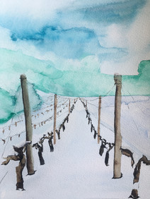 wineyards in snow henrike gootjes.JPG