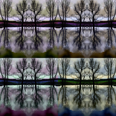 Reflections.jpg ~ These images are inspired by nature walks along the River Tyne in Haddington during the second lockdown in January/February 2021. I have been selling them as Prints (Tree Studies i and v) and as Art Cards through the Artist Support Pledge. If you are interested in purchasing, please get in touch.